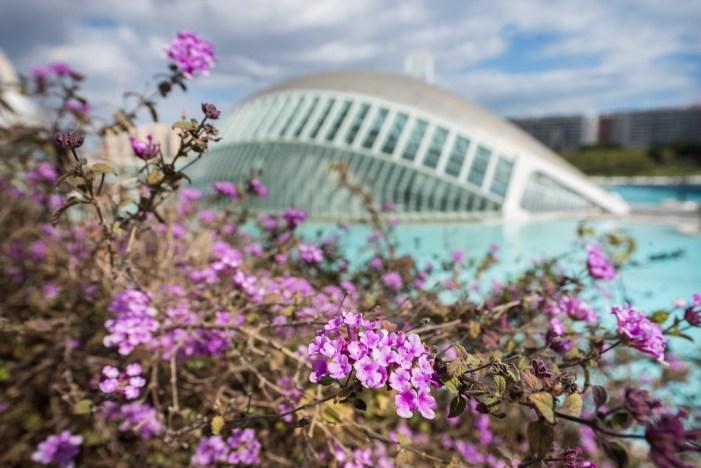 La entrada combinada del Museu de les Ciències y el Hemisfèric tiene un precio especial de 6 euros de lunes a viernes hasta el 23 de junio