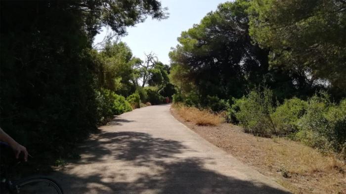 L'Ajuntament de València aprova la licitació del contracte per a la conservació i manteniment del bosc de la Devesa i el llac de l'Albufera