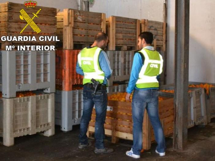 La Guàrdia Civil procedeix contra 58 persones per la sostracció de 125.000 kg de cítrics i 163.000 kg de caquis, a la comarca de la Ribera Baixa i Alta