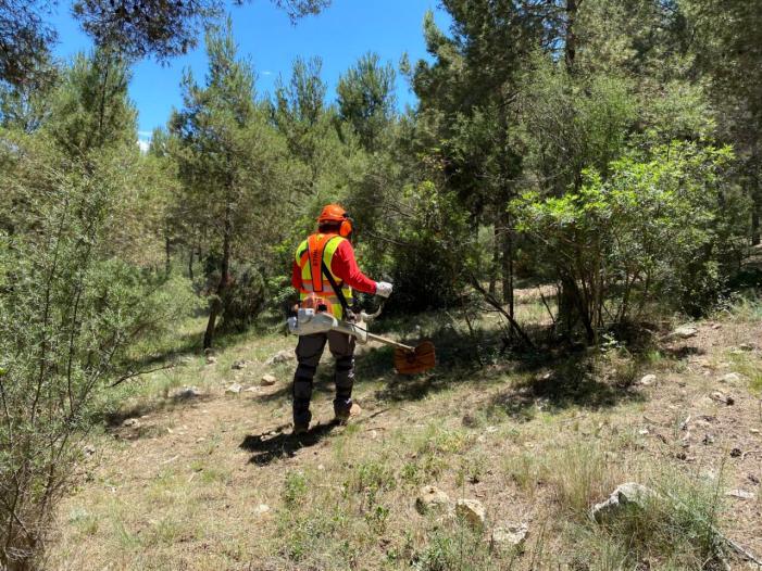 Torrent reforça els treballs silvícoles de prevenció d'incendis forestals en el Vedat