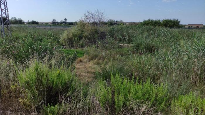 L'Ajuntament d'Almussafes  insta la Confederació Hidrogràfica del Xúquer a netejar el Barranc del Tramusser