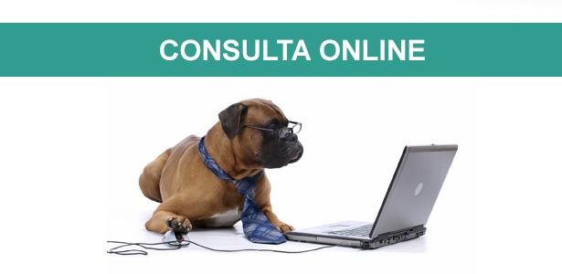 consulta comportamental online, consulta online, ricardo tamborini, especialista em comportamento canino