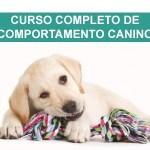 curso de comportamento canino, cursos de adestramento e comportamento, Curso completo de comportamento canino | Ricardo Tamborini