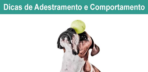 Dicas de adestramento e comportamento canino, dicas, adestramento e comportamento, ricardo tamborini, especialista em comportamento, canino