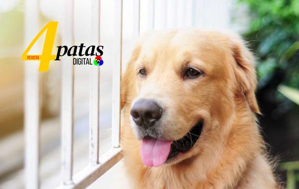A realidade atual do mercado pet na educação dos cães-Revista 4 Patas
