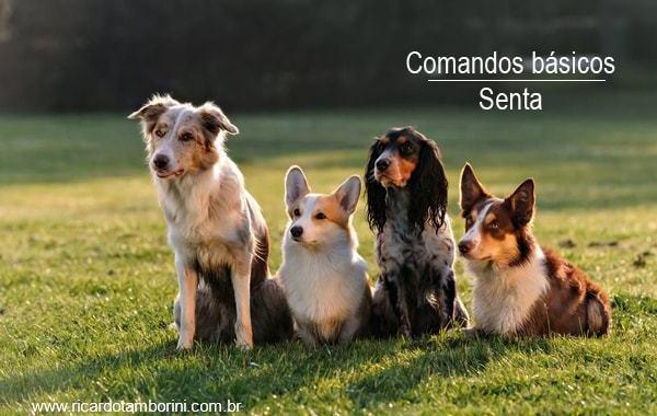 Ensine o seu cão a sentar | Comandos básicos