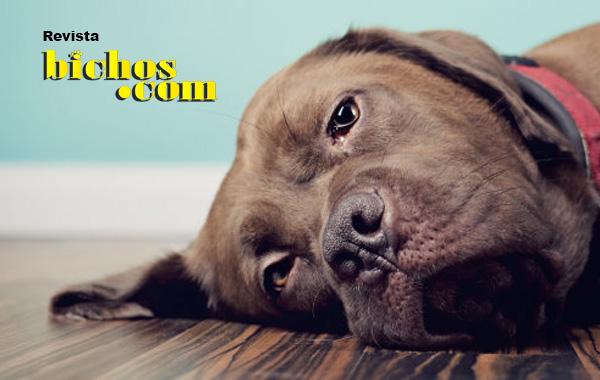 Cães e donos – Quem é o líder da casa?