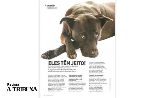 Como lidar com cães vítimas de maus tratos