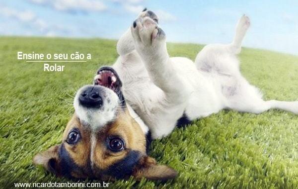 Ensine o seu cão a rolar | Truques de adestramento