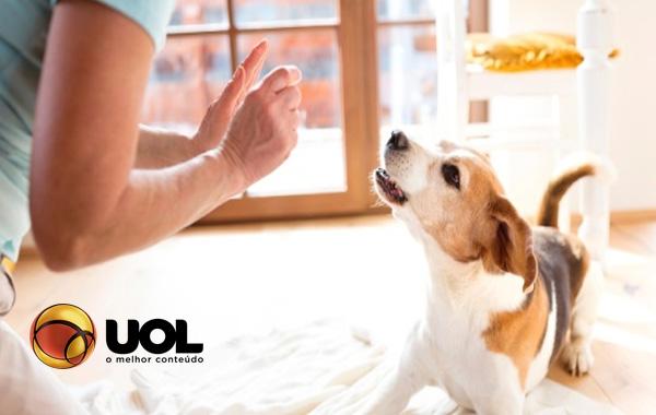Comandos essenciais melhoram a convivência com seu cão