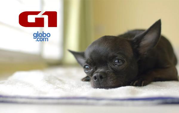 Falta de espaço pode trazer problemas comportamentais aos cães | G1