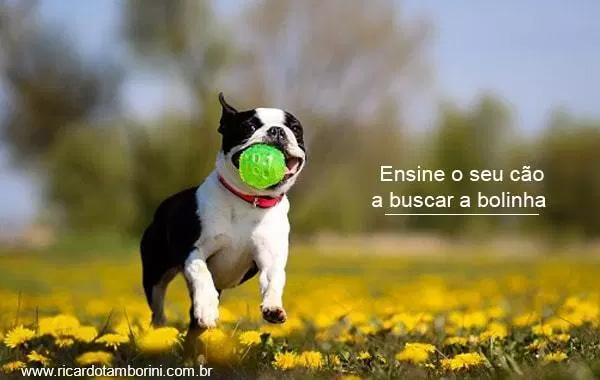 Ensine o seu cão a buscar a bolinha