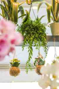Fotografo fiera Myplant & Garden