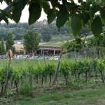 #greenfriday al Podere Lesignano, San Marino