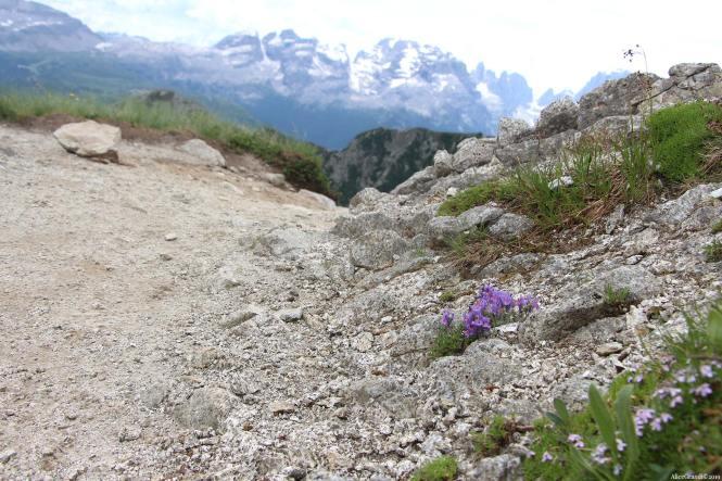 trekking-5-laghi-campiglio