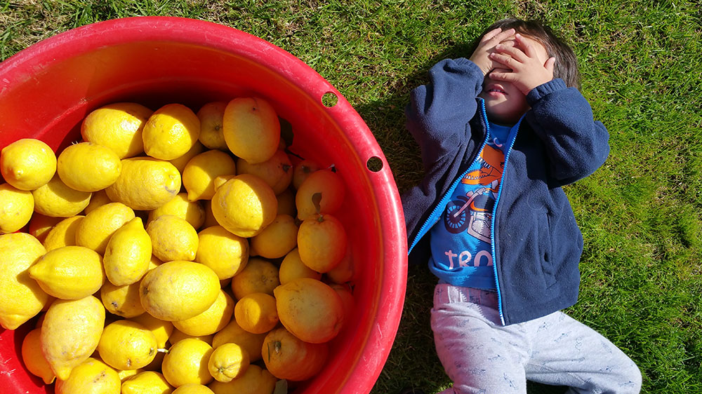 HOW TO PRESERVE LEMONS - BUCKETFULL