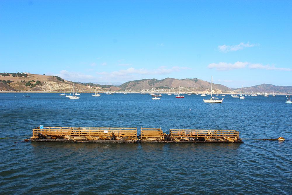 Port San Luis Avila Sea Lions