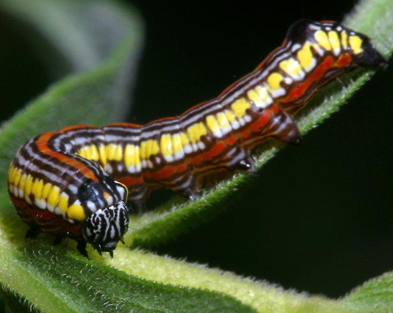 Caterpillar-Wallpaper-On-Desktop