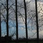 Stubbington – Jan 14 15 e ©