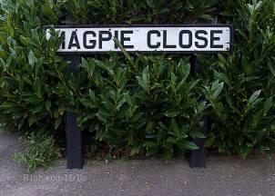 Magpie-Close---Fareham-Cams---Feb-09-30-e-©