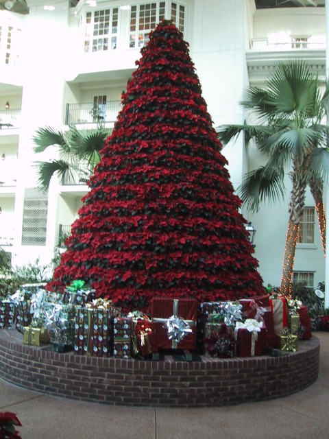 One Of The Christmas Trees