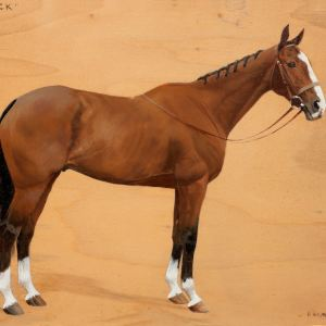 MABEL F HOLLAMS-OIL PAINTING-HORSE PORTRAIT-TINNOCK