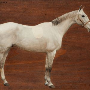 MABEL F HOLLAMS-OIL PAINTING-HORSE PORTRAIT