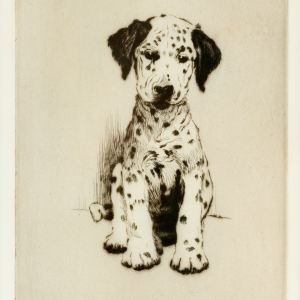 CECIL ALDIN-ETCHING-DALMATION PUPPY