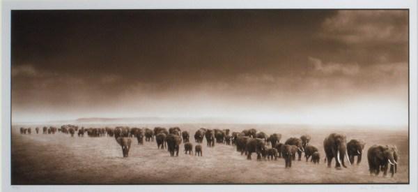 NICK BRANDT-PHOTOGRAPH-ELEPHANT EXODUS