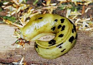 George - Slug