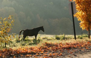 Boyd Hill Road - Horse in the Meadow