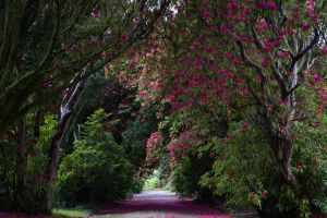 National Botanic Gardens, Kilmacurragh , Wicklow