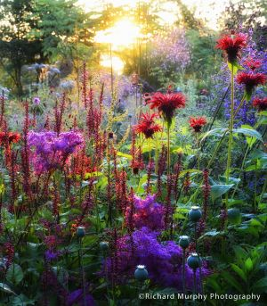 Sunrise at Hunting Brook Gardens