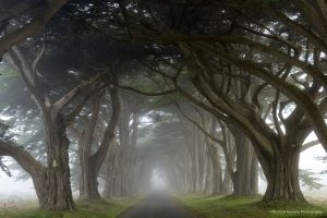 Cypress avenue, Point Reyes National Seashore, CA