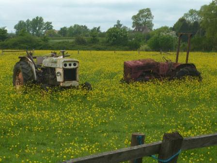 Old Tractors in Buttercups scene