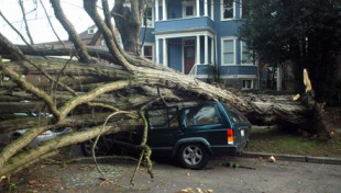car smashed by tree in seattle windstorm