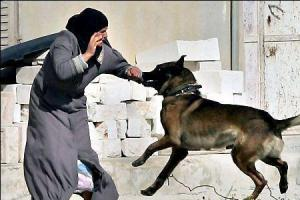 B'Tselem Demands IDF Cease Using Attack Dogs on Palestinian Day Laborers