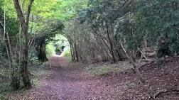 Bridge Woods