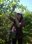 fruit-recovery-volunteer_hazel-chan