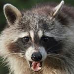 richmond va animal removal