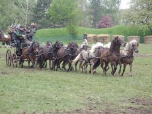 Paarden_voor_wagen