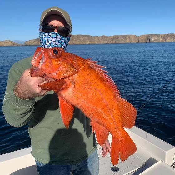 Southern California Fishing Guide's Report 12/21/2020