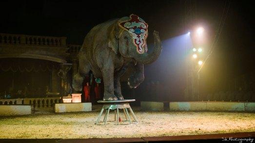 Elefánt két lábon