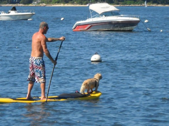 Another dog on a paddleboard.