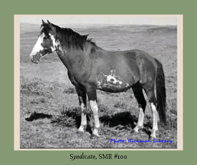 Rickman Spanish Mustangs, Spanish Mustangs, stallions, Colonial Spanish Horse, SE Oklahoma, Rickman, Blackjack Mountain, Gilbert Jones, foundation herd, foundation stock