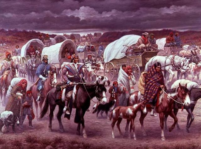 Trail of Tears, Choctaw Horses, Colonial Spanish horses, Rickman Spanish Mustangs, Blackjack Mountain, Spanish Mustangs