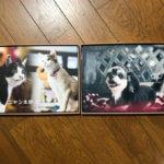 かわいいアルバム・DVDセット*ペット写真撮影会*