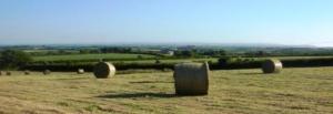 Youldon Moor hay crop
