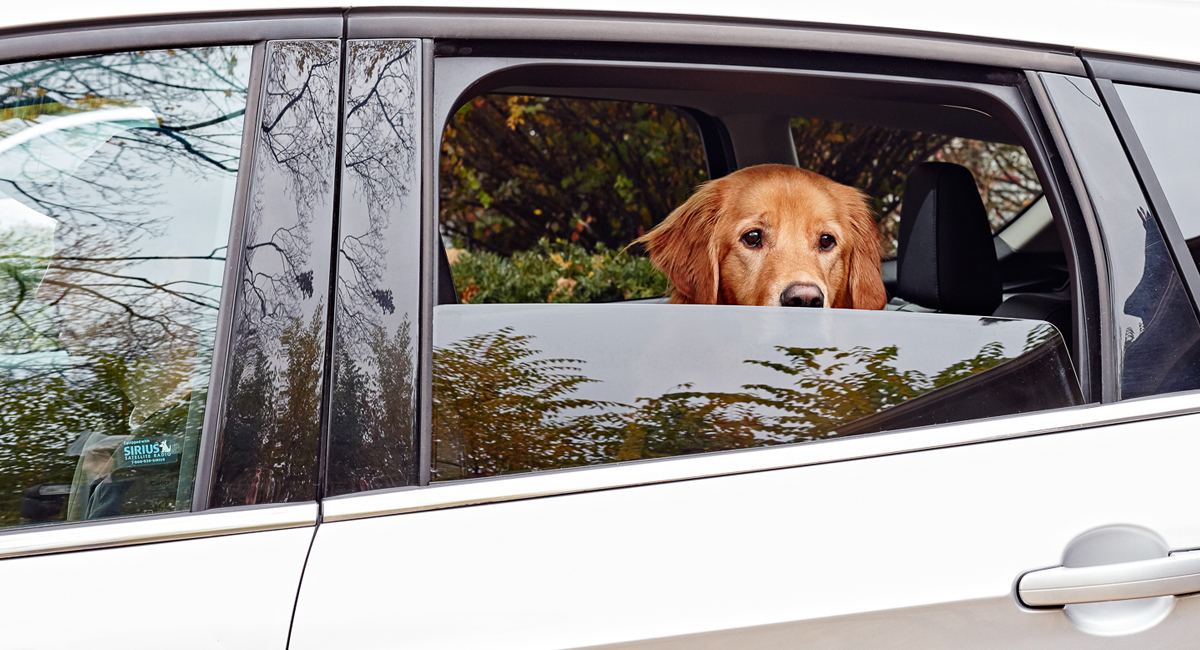 Roll a windows down for your dog so they can suffer some uninformed atmosphere and stay cool.