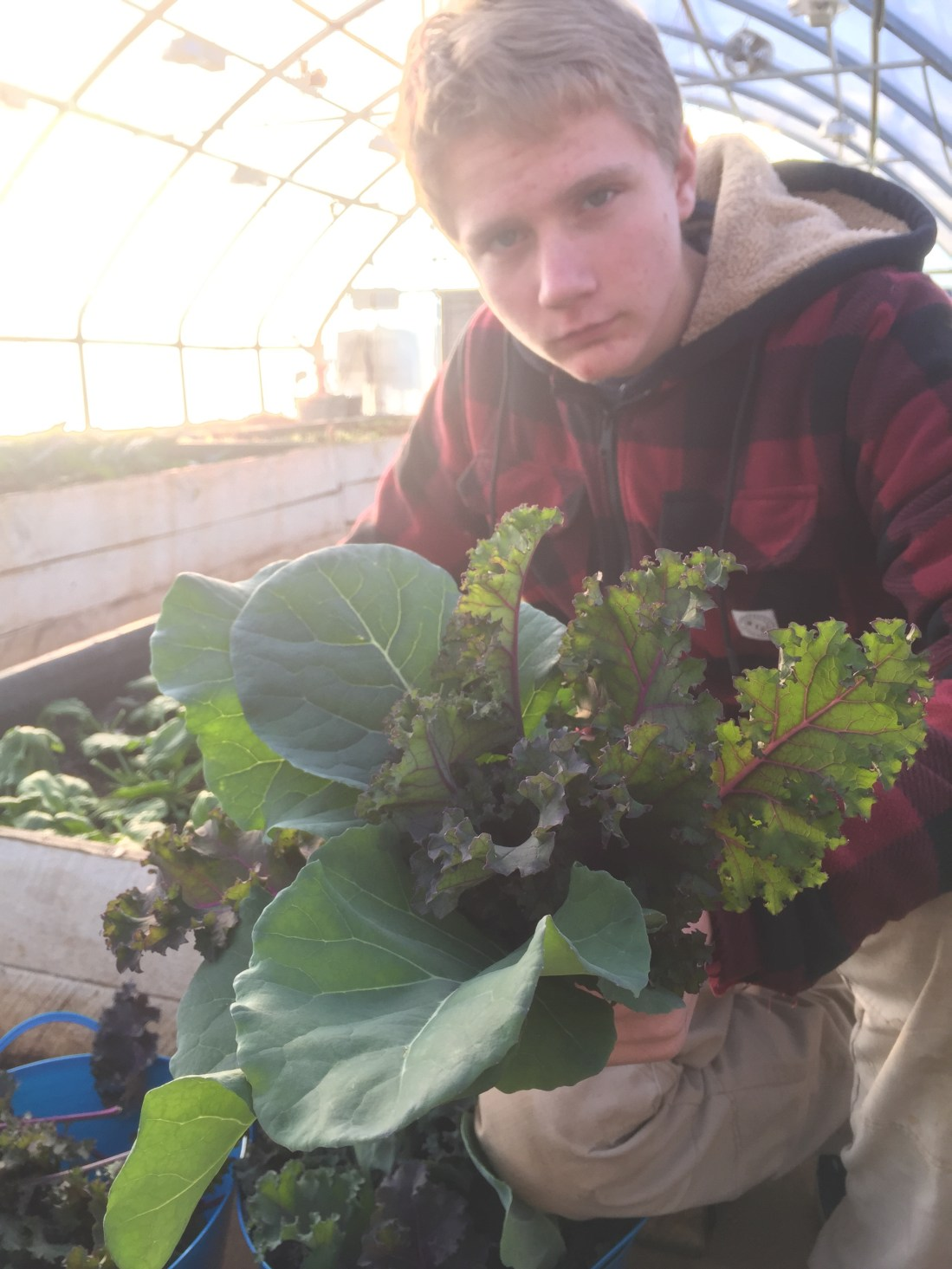 Guys growing greens